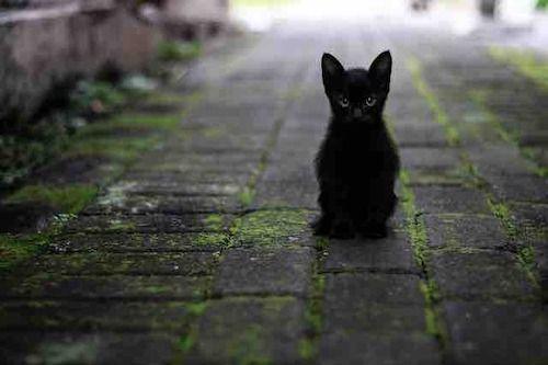 chat noirvous suit