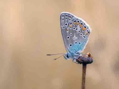 signification des papillons