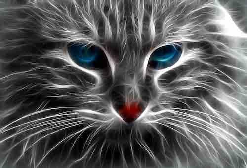 chats seraient des êtres doués d'empathie