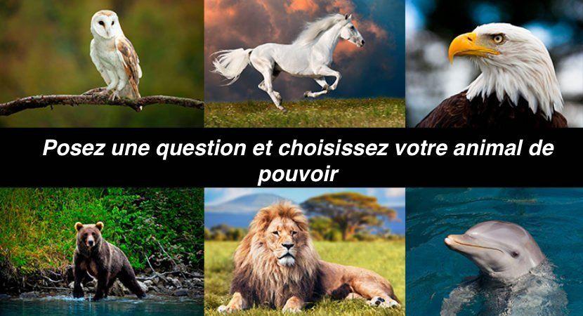 Test : posez une question et choisissez votre animal de pouvoir:
