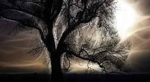 Symbolisme du chêne