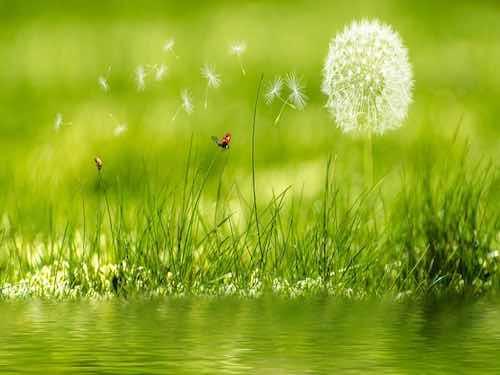 esprit des plantes