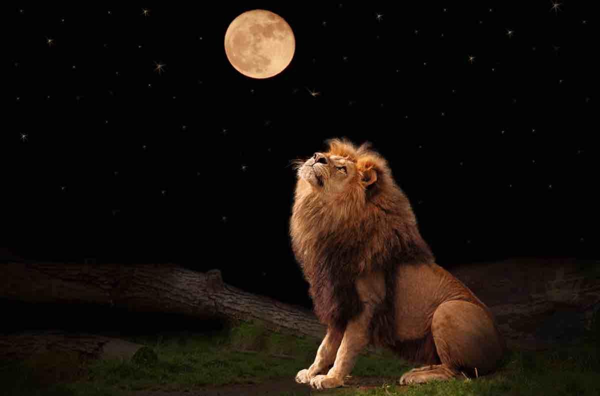 Pleine Lune du 9 Février 2020 - Page 3 Pleine-lune-en-Lion-du-9-f%C3%A9vrier-2020