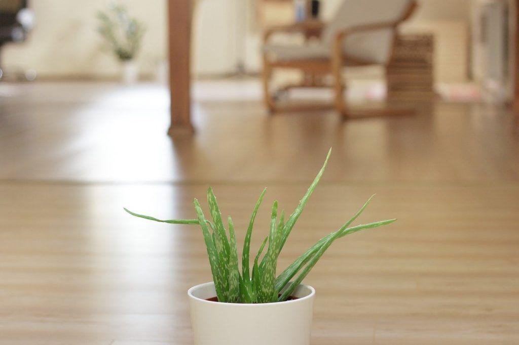 plantes chance