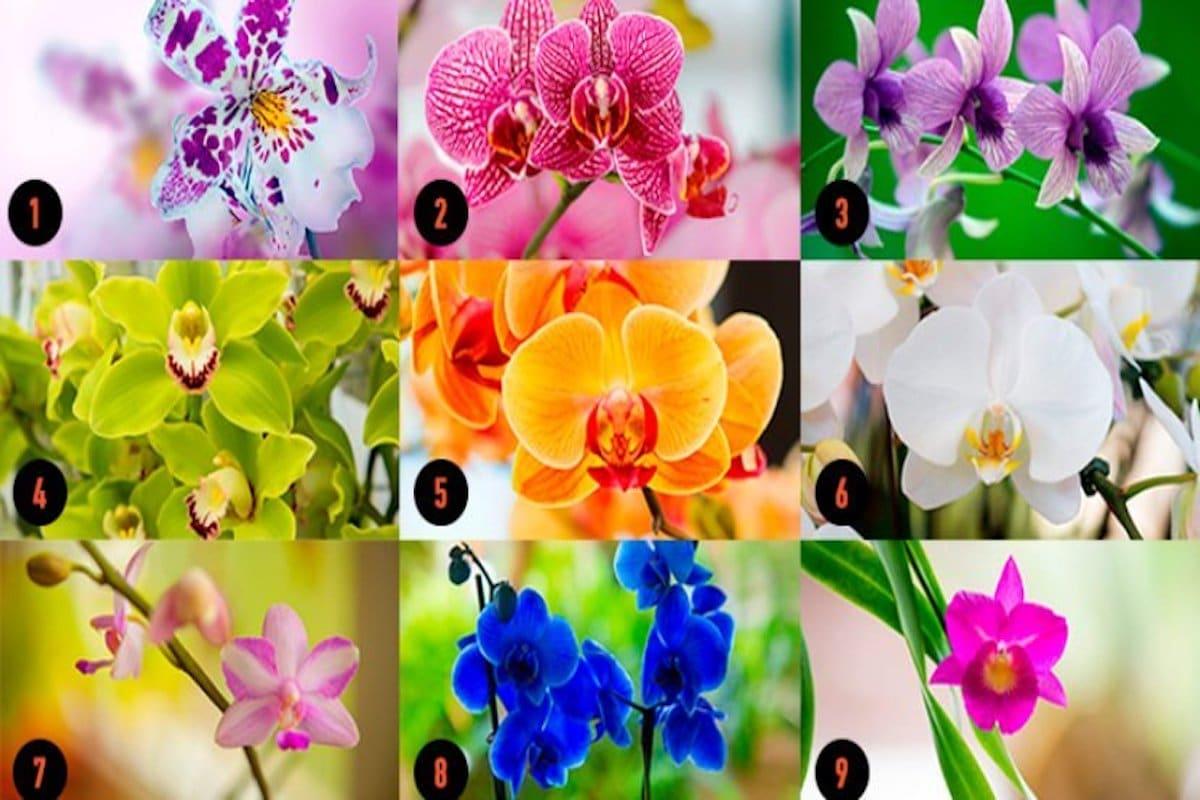 Choisissez-une-orchidée