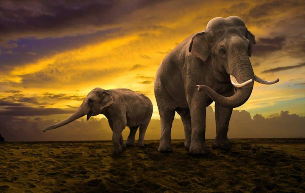 éléphant bague de mariage