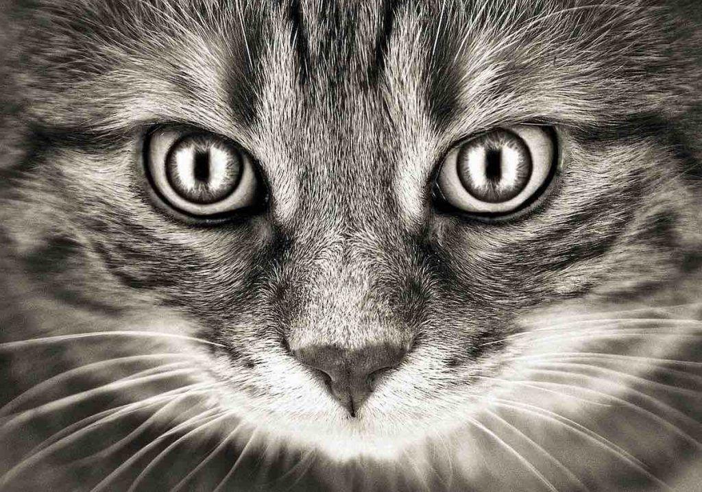 chat et la spiritualité