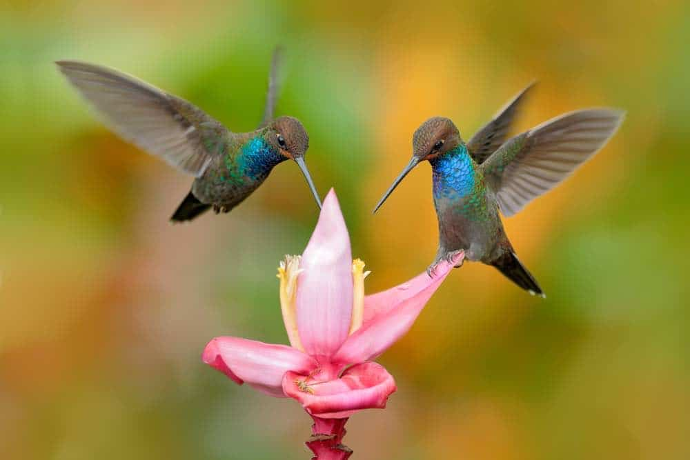 messages spirituels colibris