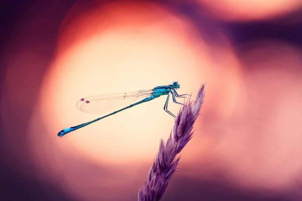 libellules-signification