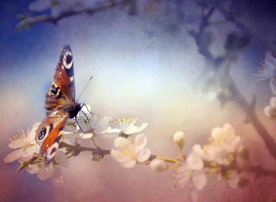 messages spirituels papillons