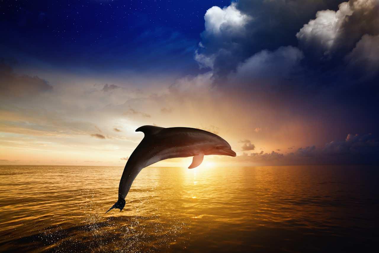 dauphin signification spirituelle