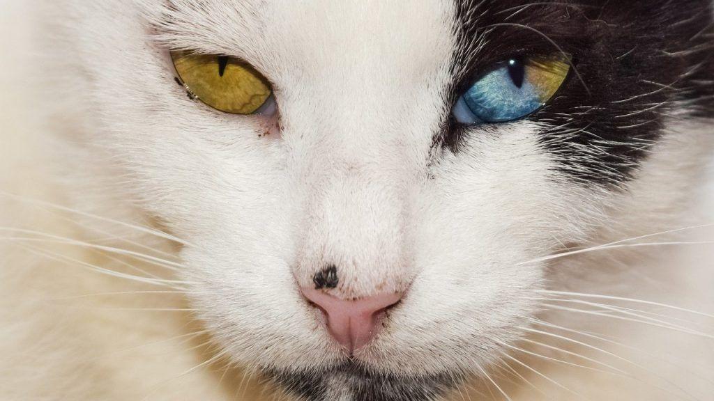 chats sont des empathes