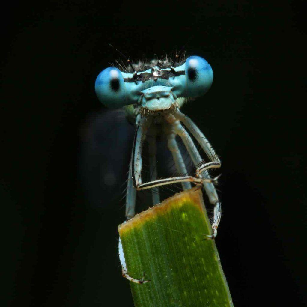 libellules nous transmettent