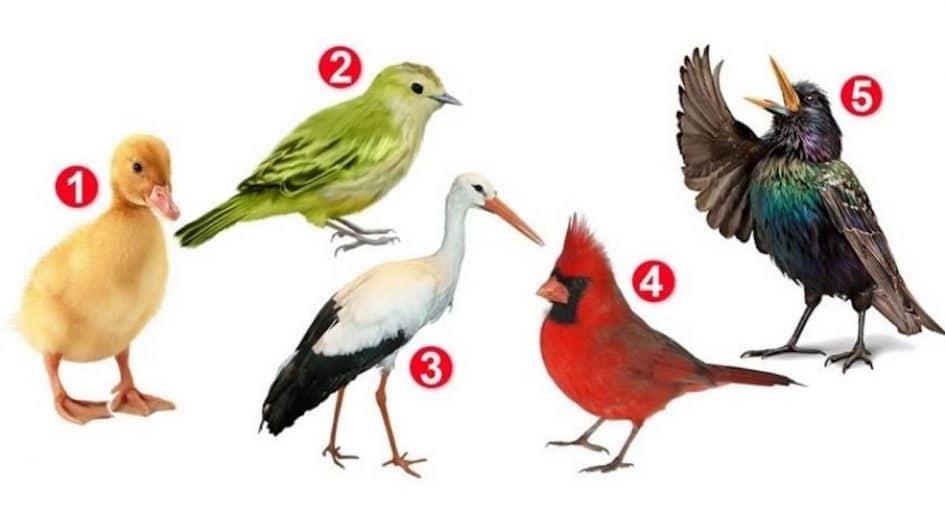 oiseau-que-vous-choisissez-revelera