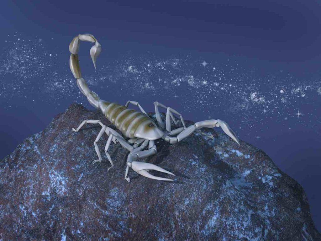saison 2020 du Scorpion