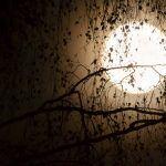 Pleine lune / éclipse lunaire du 30 novembre 2020