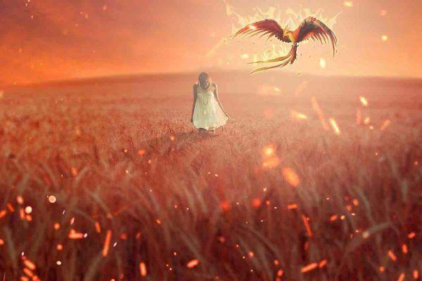 signification spirituelle du phénix