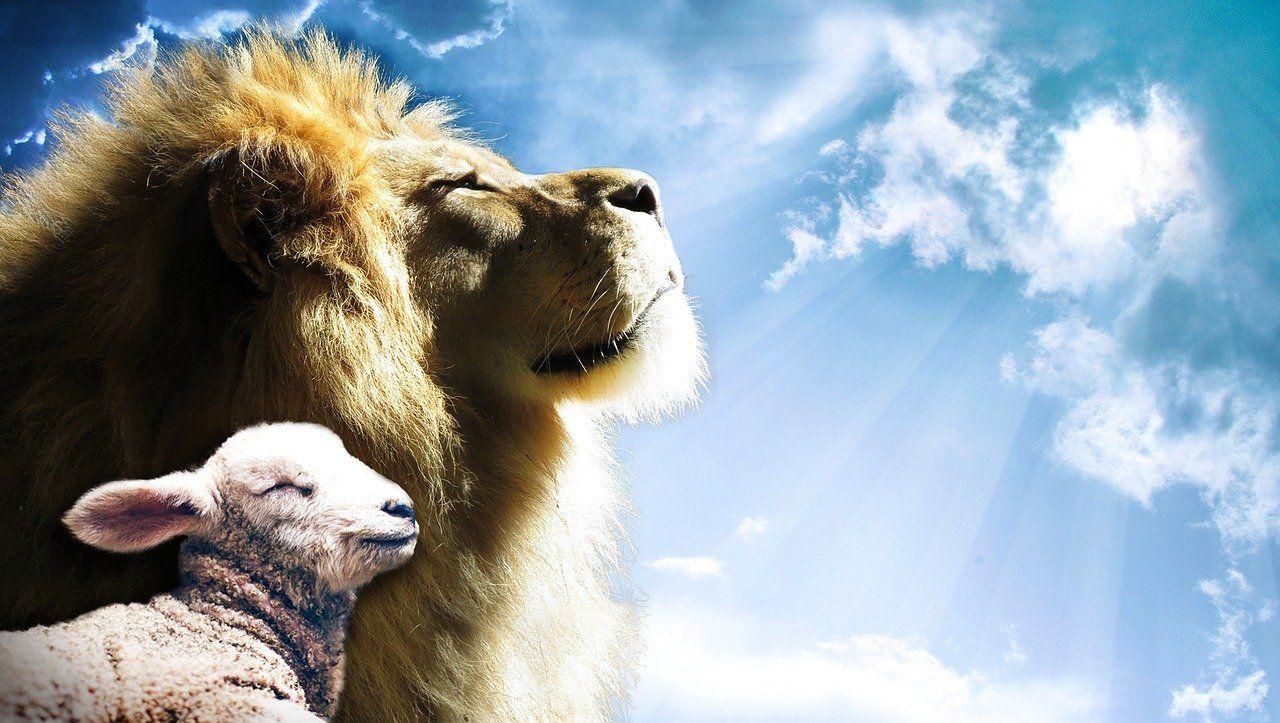 parabole du lion