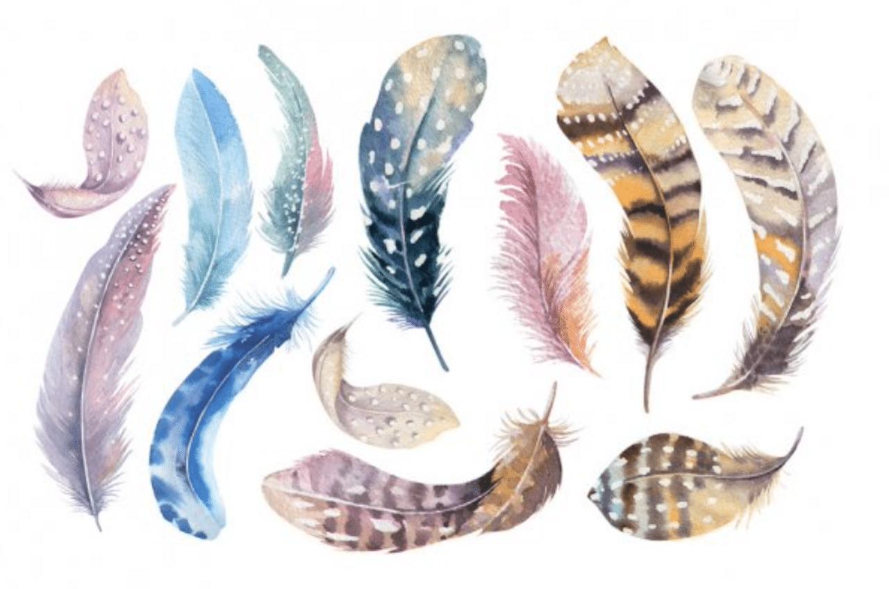Significations messages couleurs de plumes