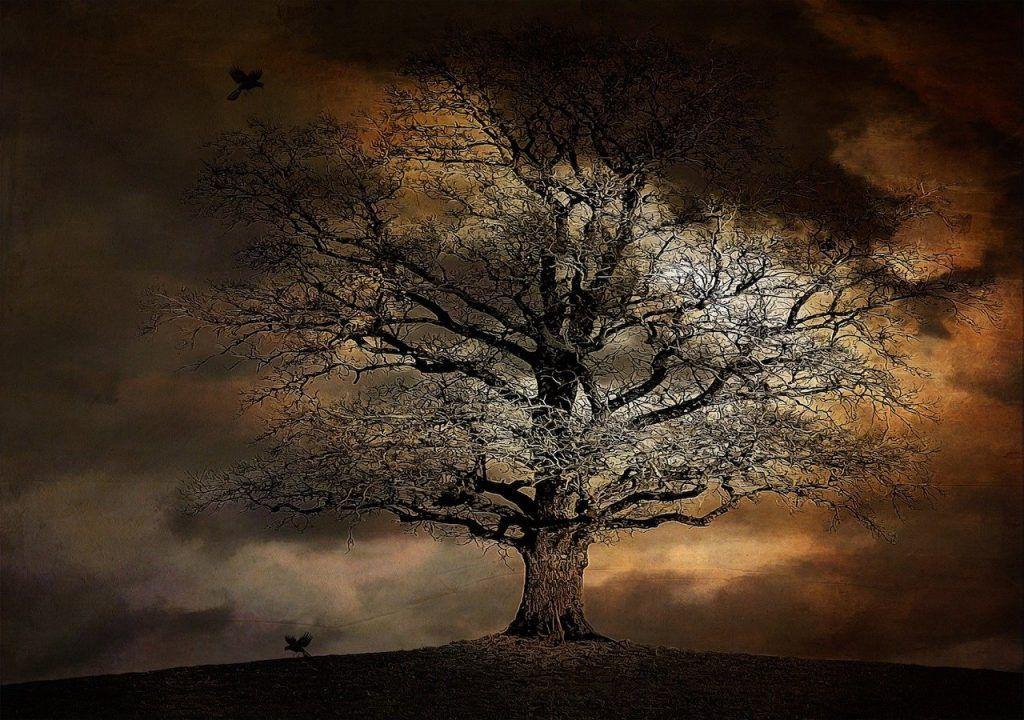 arbre des désirs