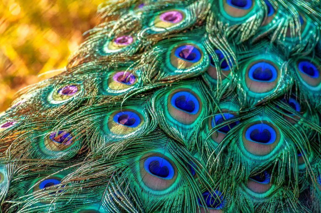 couleurs de plumes