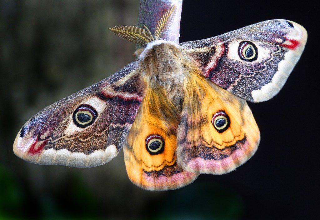 signification spirituelle du papillon de nuit