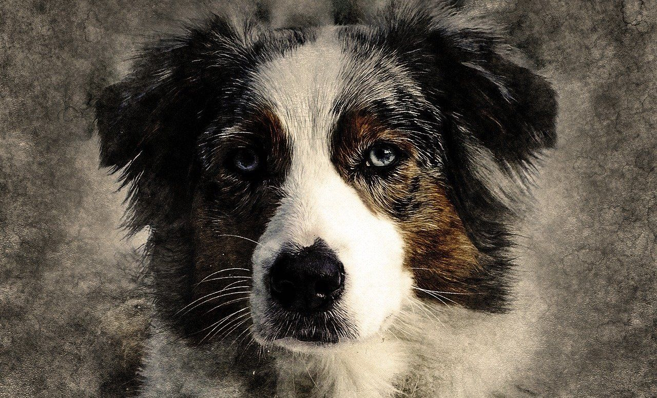 chien et la spiritualité