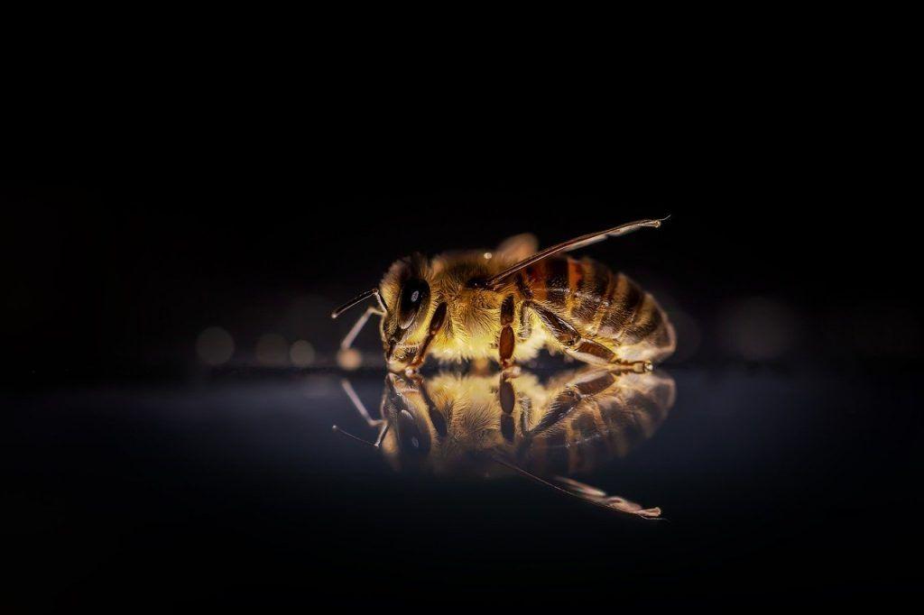 signification spirituelle des abeilles