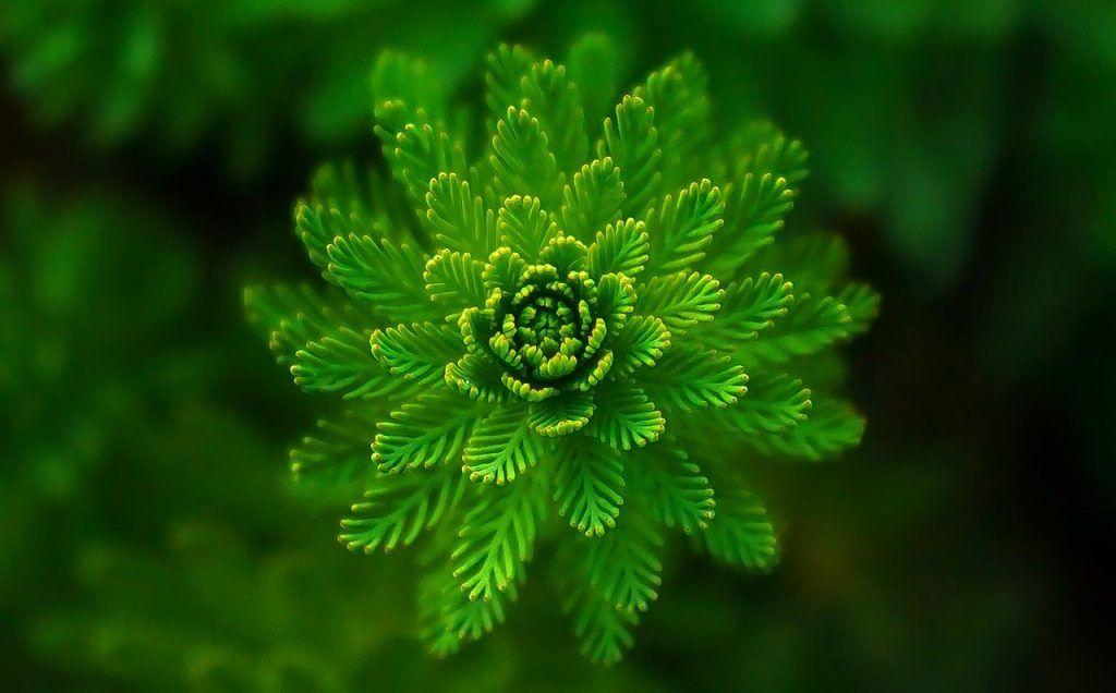 signification spirituelle de la couleur verte