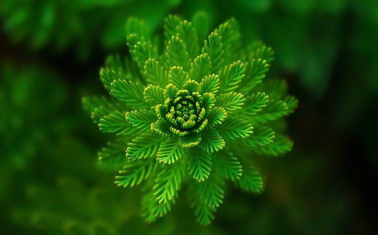 signification spirituelle couleur verte