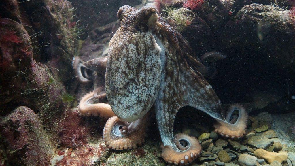 âme d'une pieuvre