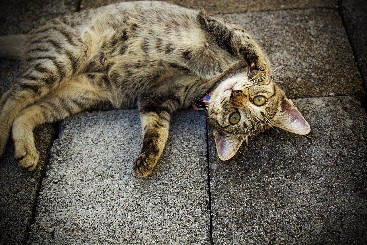 chat à votre porte